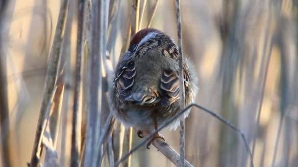 Wildvogel in natürlichen Lebensraum, Natur-Serie