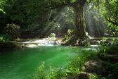 pohled na panorama hezký vodopád a rybník v zelených tropických prostředí