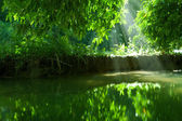 pohled na pěkné zelené vody rybníka v tropic prostředí