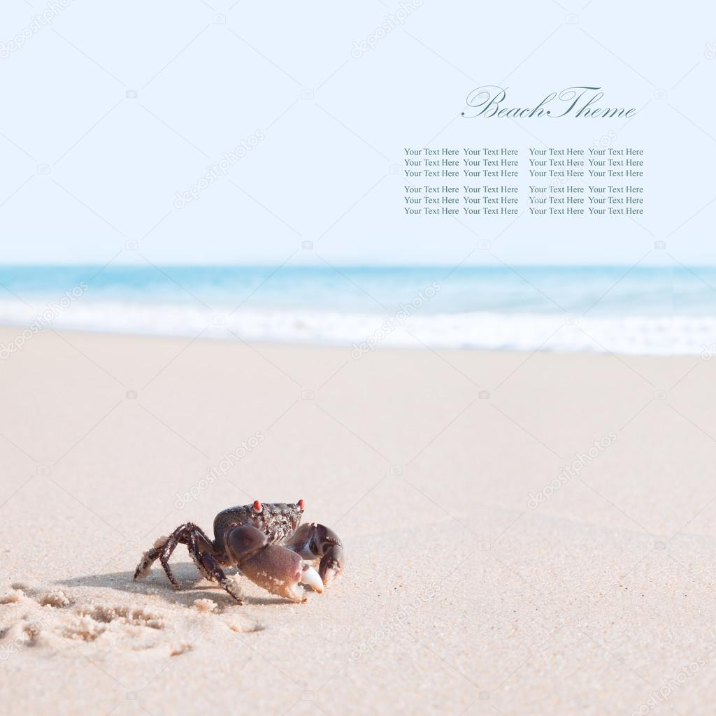 Crab on a tropical beach. Banner. Extra space for your text