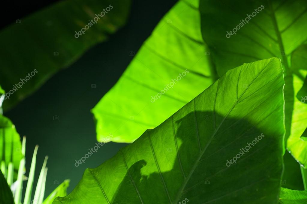 Close up view of fresh green tropic leafs.