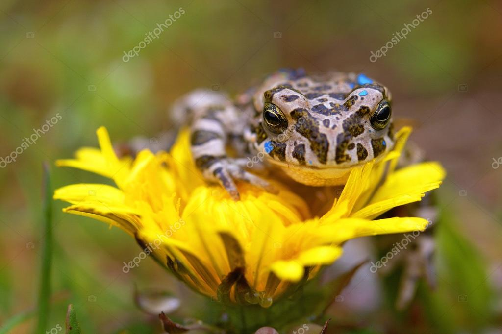 Young toad on the flower