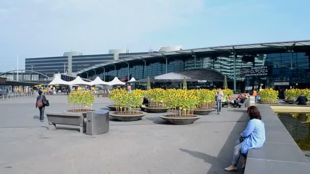 Slunečnice v Amsterdam Airport Schiphol, Amsterdam, Nizozemsko