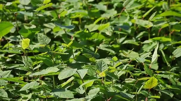 Zelené listy na keře