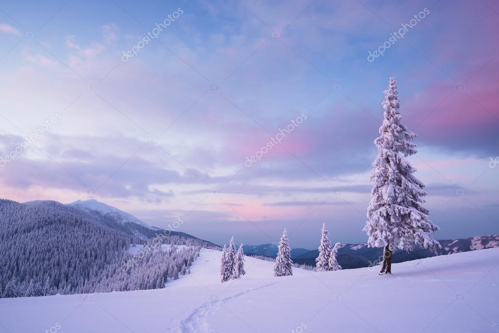 Weihnachten-Landschaft mit Tanne im Schnee — Stockfoto © Kotenko ...