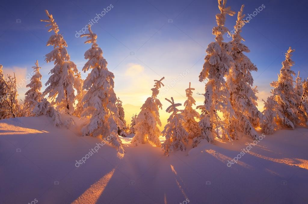 Fabulous Winter Forest Stock Picture