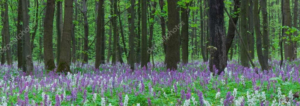 Spring landscape. Flowers in the Forest