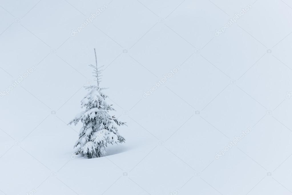 Tannenbaum Mit Schneefall.Tannenbaum Im Schnee Stockfoto Kotenko 91569830