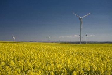landscape yellow rape and blue sky