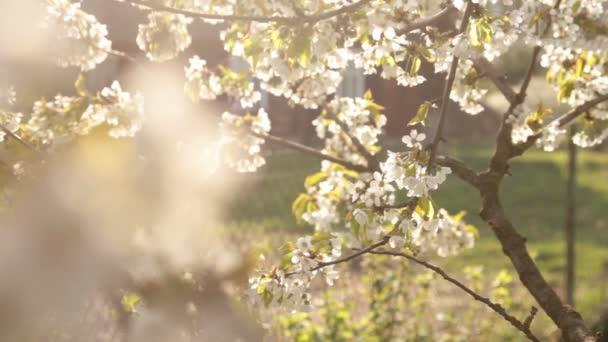 Virágszálnak Apple vele fa szél