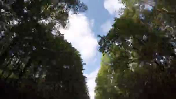 rychlou jízdu přes podzimní lesní cesta