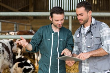 Farmer and veterinary working together in a barn
