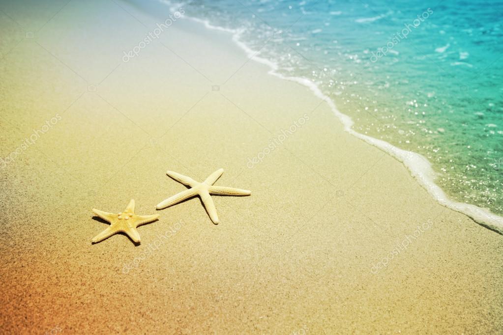 starfish on a beach sand