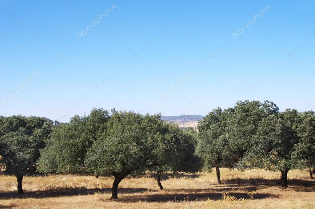 mediterranean forest at south of Portugal