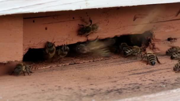 Roj včel v úlu