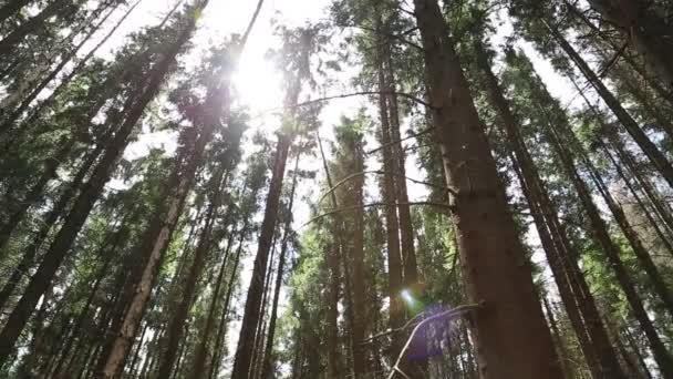 Sluneční paprsky procházejí stromy