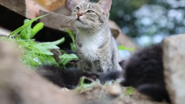 Graue Katze mit ihrem Kätzchen