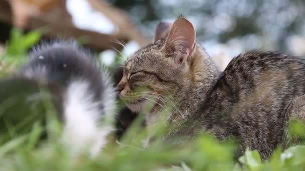 Graue Katze mit Kätzchen