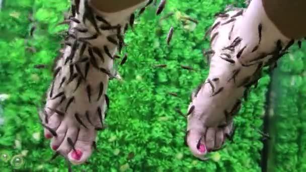 Ryb Garra Rufa a žena nohy