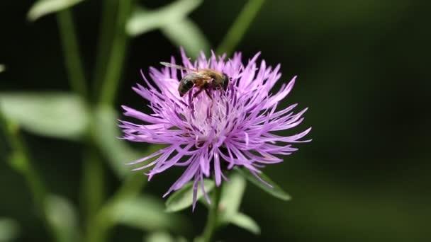 repülő rovarok, a virág