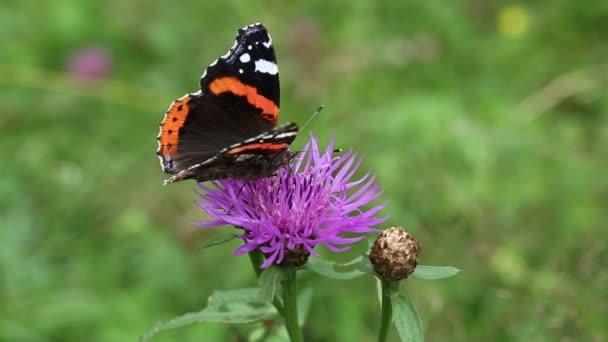 Gyönyörű pillangó a virág