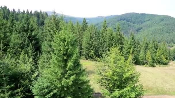 Letecký pohled na les