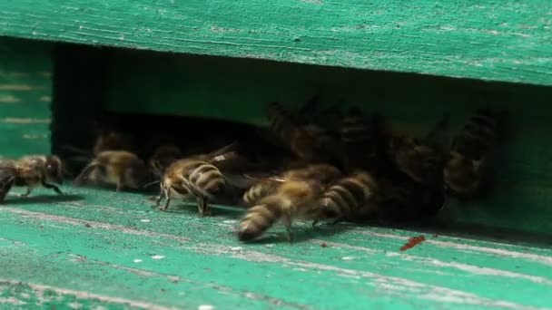 Unrestful bees in beehive