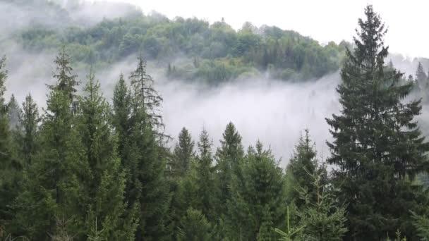 Mlha v jehličnatých lesů
