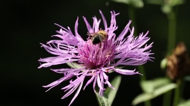 Repülő rovar ül a virág