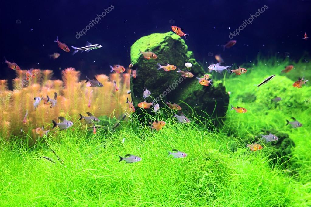 Colorful fishes in aquarium
