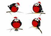 Vánoční ptáci