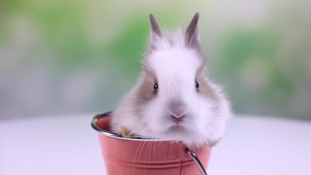 Baby zajíček sedí v kbelíku