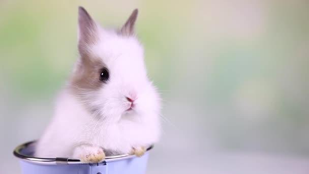 Coniglietto del bambino che si siede in secchio