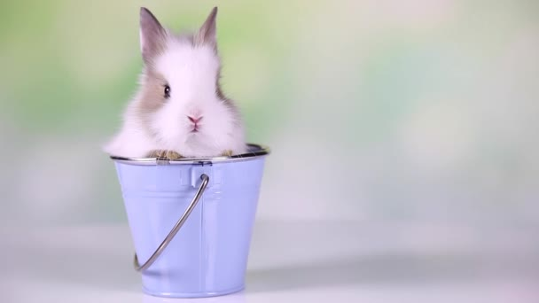 Baby Bunny sitting in bucket