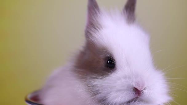 Pretty Baby Bunny