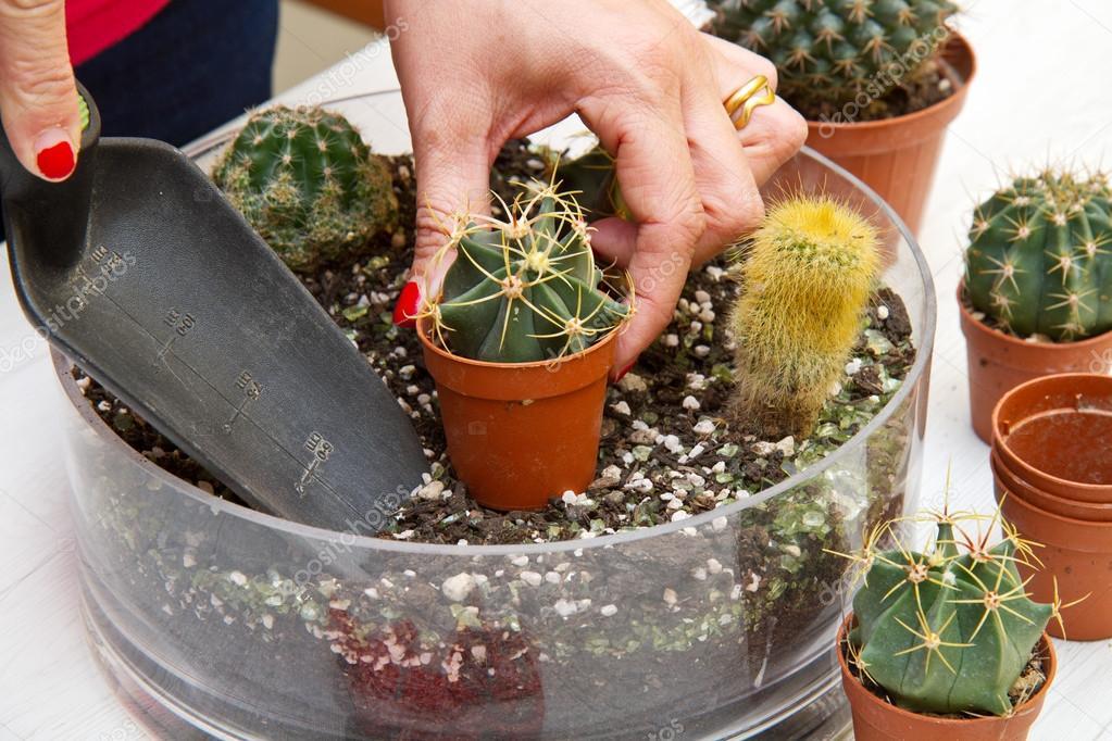 Macetas varios peque os cactus en una olla de vidrio - Cactus en macetas pequenas ...