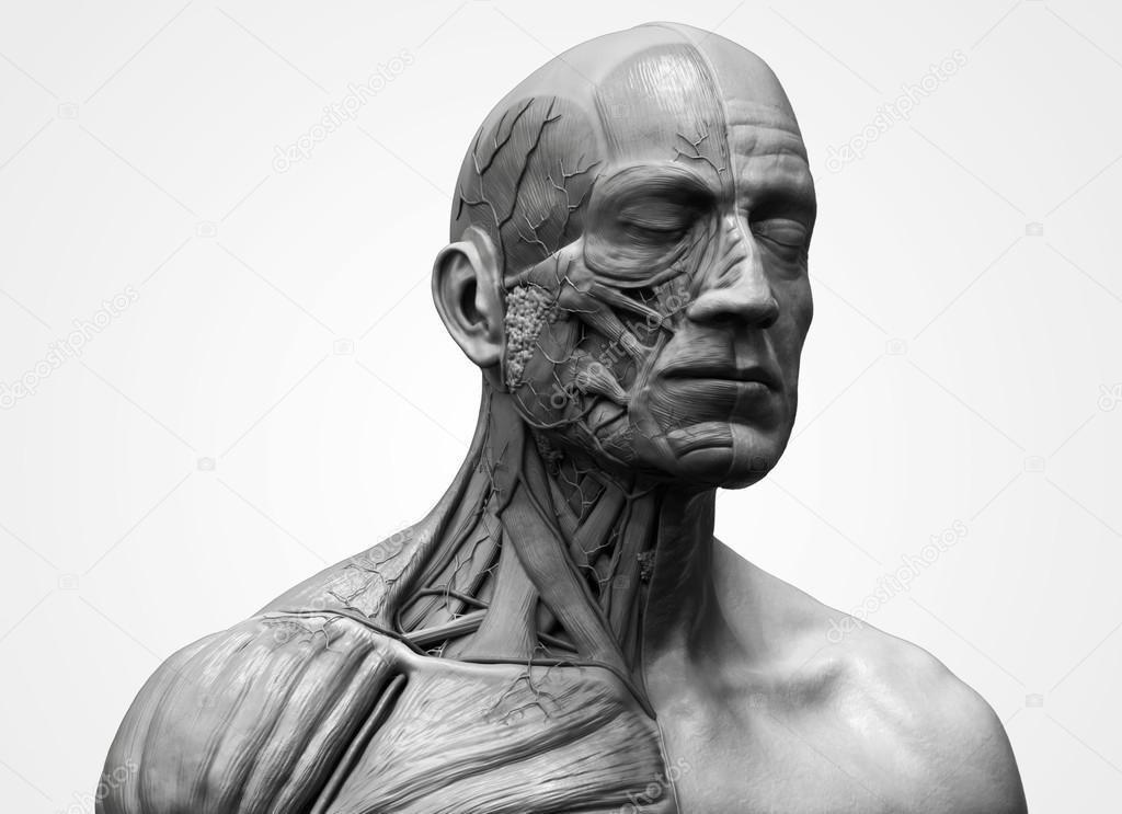 Anatomía de la cabeza — Foto de stock © abidal #119980622