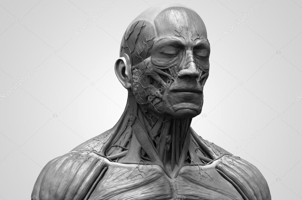 Anatomía de la cabeza — Foto de stock © abidal #119980786