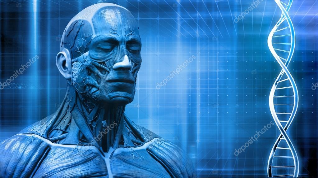 Fondo de anatomía del cuerpo humano con el ADN — Fotos de Stock ...