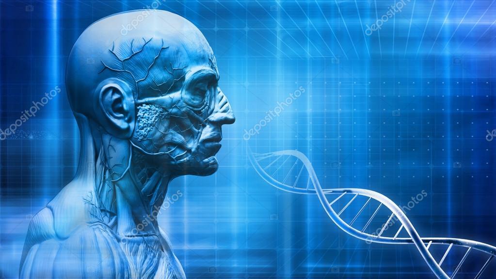 Fondo de anatomía del cuerpo humano con el ADN — Foto de stock ...