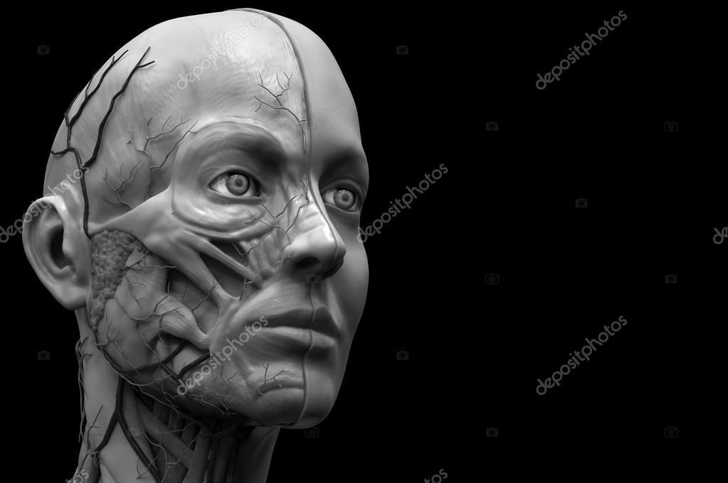 anatomía humana de mujer — Foto de stock © abidal #120072606