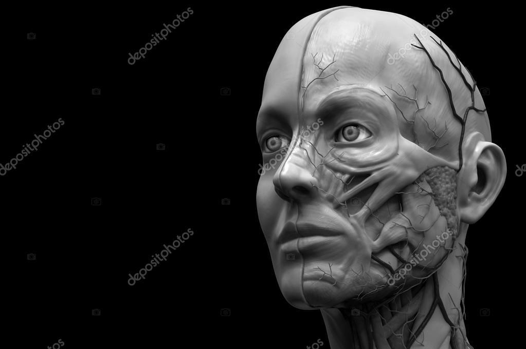 anatomía humana de mujer — Fotos de Stock © abidal #120072662