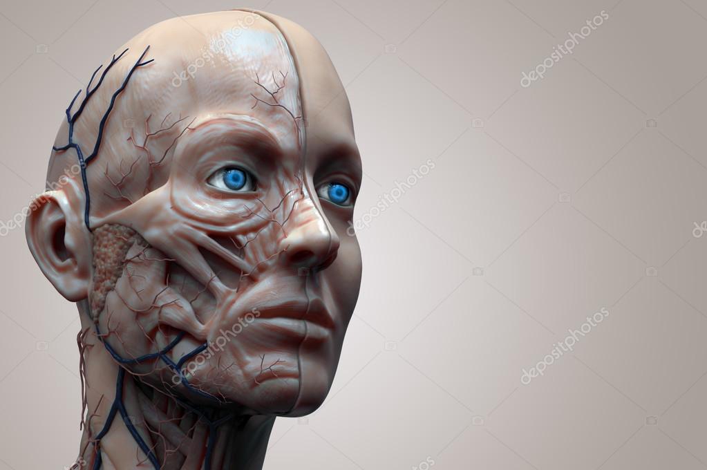 menschliche Anatomie der Frau — Stockfoto © abidal #120072706