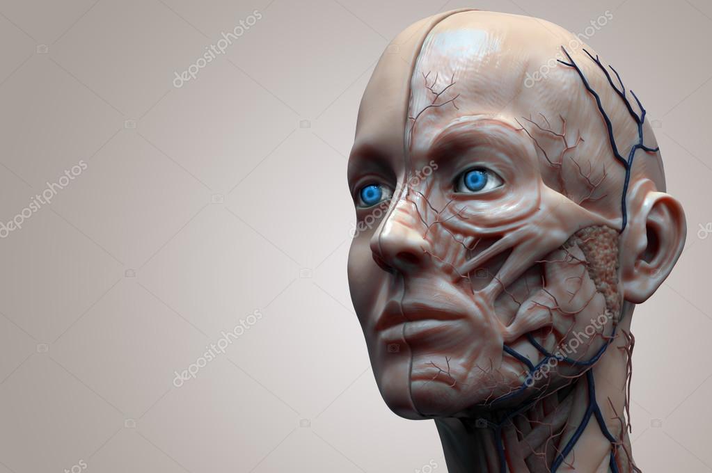 anatomía humana de mujer — Foto de stock © abidal #120073382