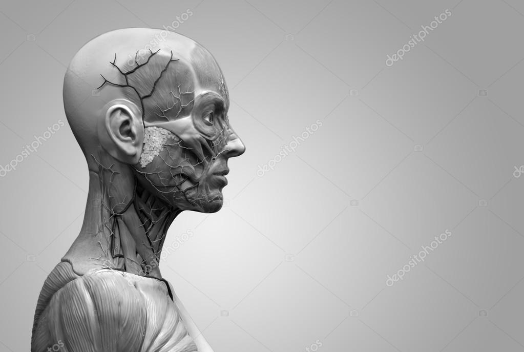 menschliche Anatomie der Frau — Stockfoto © abidal #120073852