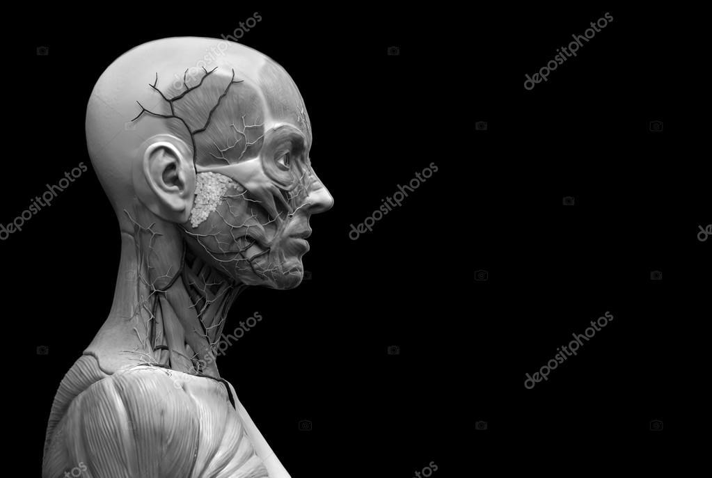 anatomía humana de mujer — Foto de stock © abidal #120074036