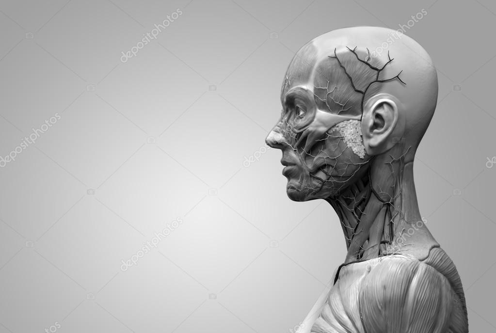 menschliche Anatomie der Frau — Stockfoto © abidal #120074152