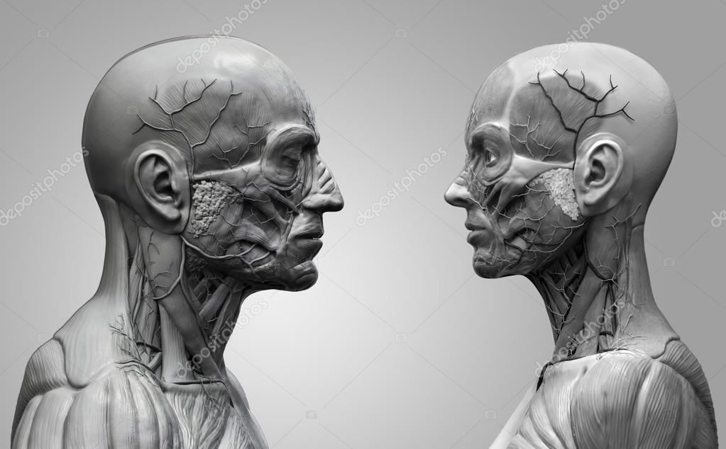 Fondo de la anatomía humana, masculina y femenina — Fotos de Stock ...