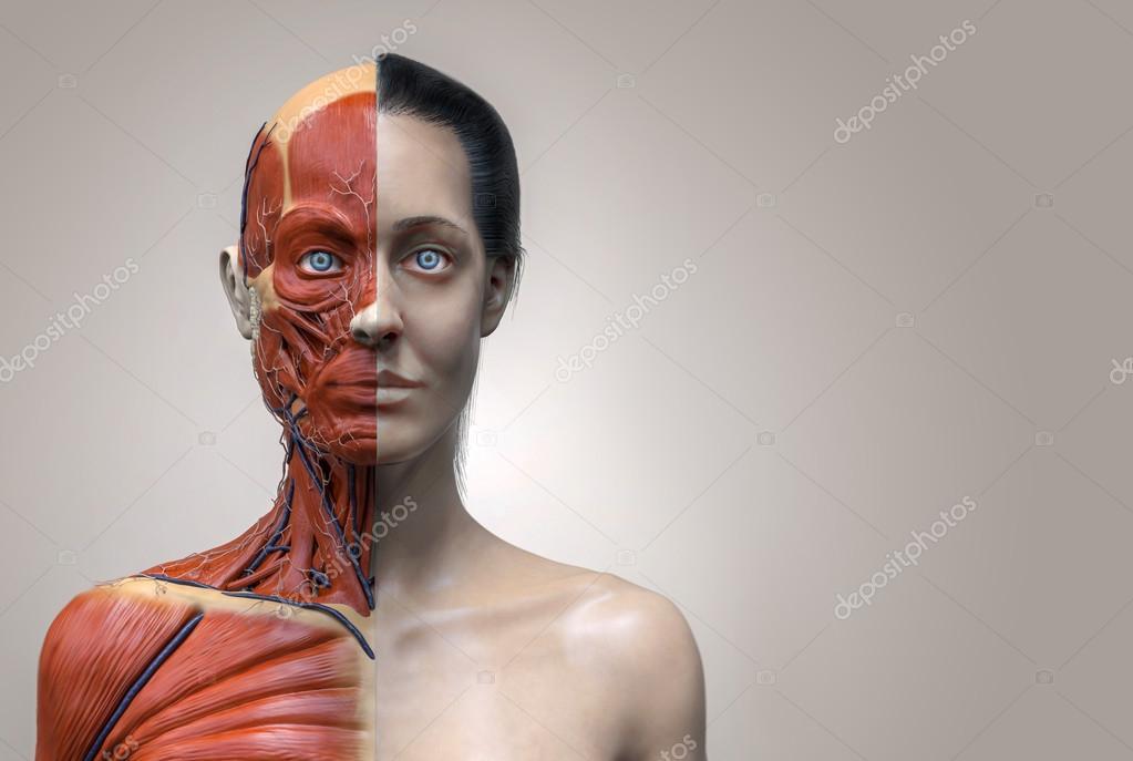 menschliche Anatomie der Frau — Stockfoto © abidal #120077590