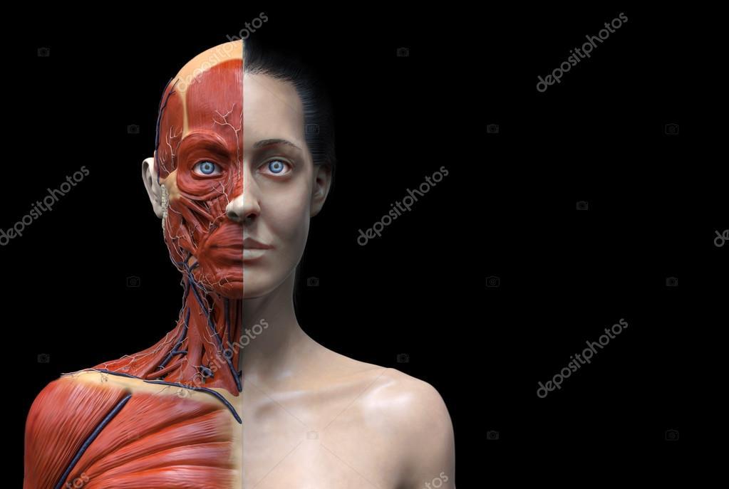 menschliche Anatomie der Frau — Stockfoto © abidal #120077654